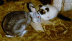 Buffy and the bunny trusted each other to share the carpet and be kind.