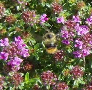 Can you see the bee now?