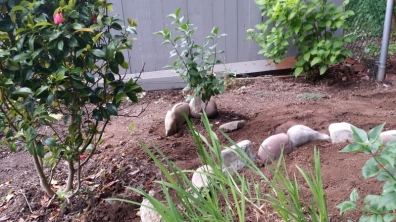 Need more rocks to enclose second Lilac tree in the circle.