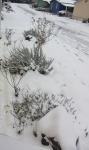 plants-frozen-cropped