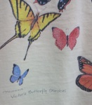 victoria butterfly