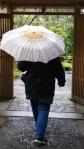 Daisy for rain
