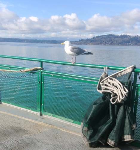 This hitchhiker rode the ferry all the way.
