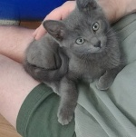 foundling foster