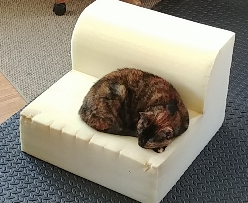 Gracie on the chair