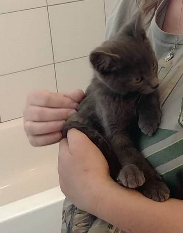 rescued from under the porch