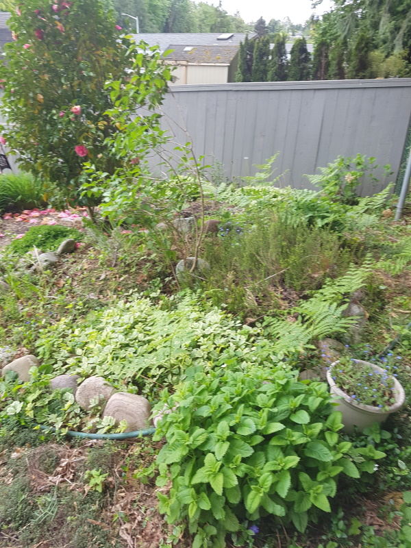 weeding required
