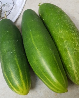 So many good cucumbers this year